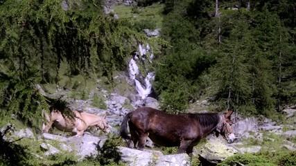 muli nella natura selvaggia