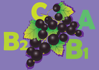 Fruit and vitamins that they contain. Blackcurrant.