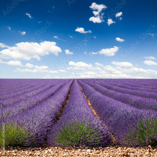 Lavande Provence France / lawendowe pole w Prowansji, Francja