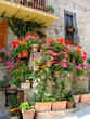 Colorful potted flowers along a medieval stone wall in Italy