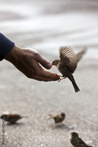 sparrow get fed