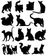 Illustration of black cats