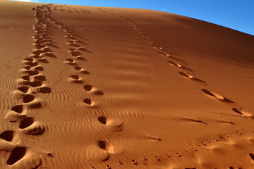 prints on sand dune,Namibia