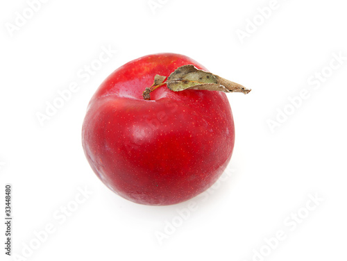 one red plum in closeup over white background