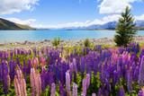 Fototapety Lupin Flowers