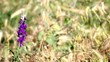 Grass & Flower