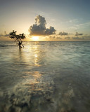 Majestic sunrise with mangrove tree, near Miami's Key Biscayne