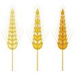 set of golden wheat isolated on white background