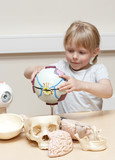 Cute litte girl (5 years old) playing with anatomical models poster