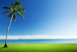 palm and Caribbean sea