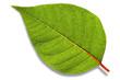 Leinwandbild Motiv isolated leaf