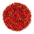 red currant bunch