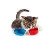 Occhiali 3D e gattino
