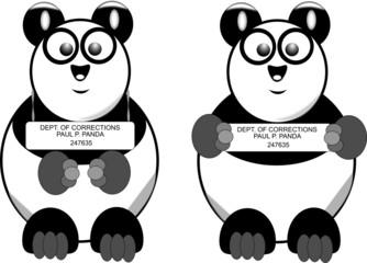 busted panda mug shot