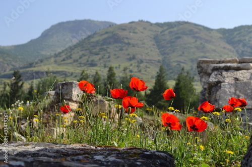 Wild flowers at Hierappolis in Turkey
