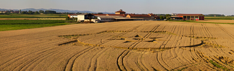 Real UFO crop circles in the field - Poirino (TO), Italy