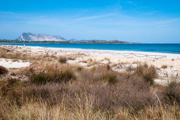Sardinia, Italy: La Cinta beach, near San teodoro.