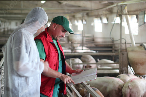 Pig Farm Workers - 33489412