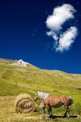 Cavalli a Castelluccio di Norcia - Valnerina