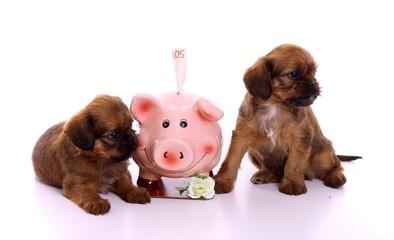 zwei Welpen mit Sparschwein