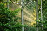 Fototapety Sun rays