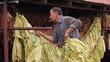 Farmer drying Tobacco