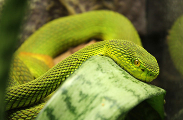 green snake in jungle