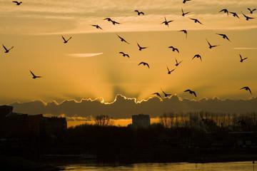 Sunrise with birds in the sky
