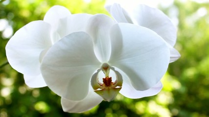 Orchid on the nature