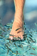 Feet pedicure fish spa