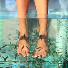 Fish Spa Skin Treatment