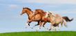 Three sorrel stallions gallop