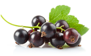 currant berries with leaf