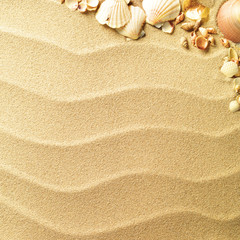 sea shells with sand as background