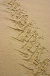 Tractor Trace in sand - 1