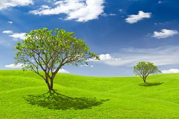 plumeria tree on green grass meadow