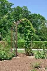 Floral Arch in rose garden