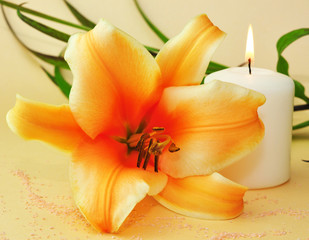 Lilie, Kerze