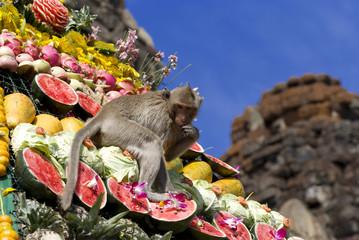 Monkey buffet festival in Thailand