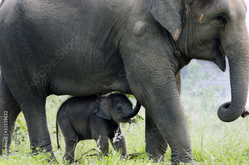 Fotobehang Olifant Elephant: mother and child's love