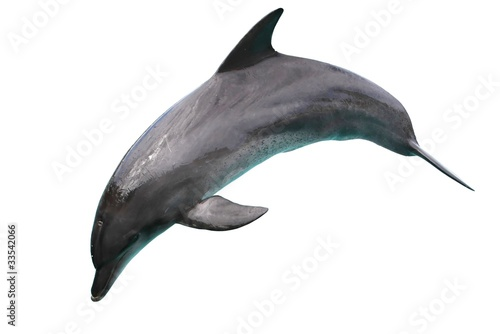 Fotobehang Dolfijnen Dolphin isolated on White Background