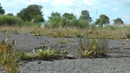 Gras wird niedergetreten