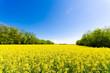 Spring meadow under a blue sky