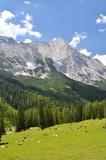 Bergalm und Bergwiese Hochkant