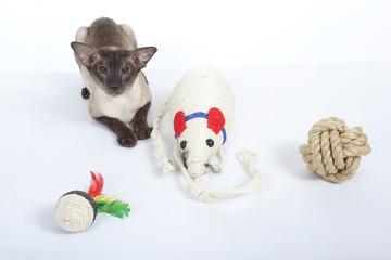 chat siamois et sa panoplie de jouets