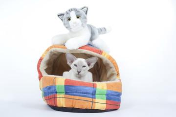 vrai chat et chat en pleuche