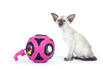 jeu de découverte pour le jeune chat