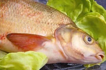 Karp,Fisch