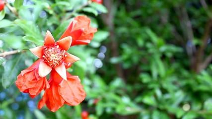 Garnet Bloom