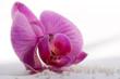 orchidee und globuli